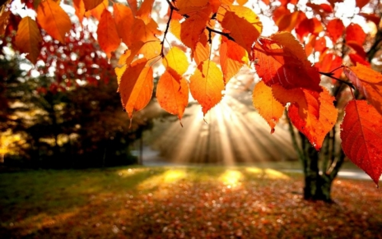 autunno soleggiato.jpg