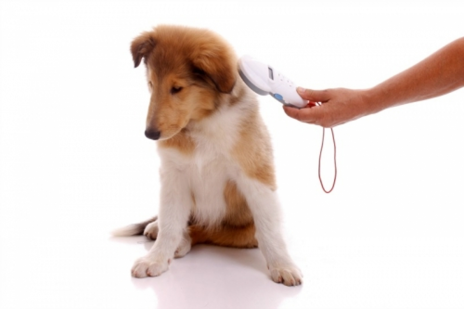 dog-being-scanned-for-microchip.jpg