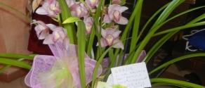 orchidea per il doppio senso.JPG