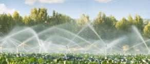 campi irrigati.jpeg