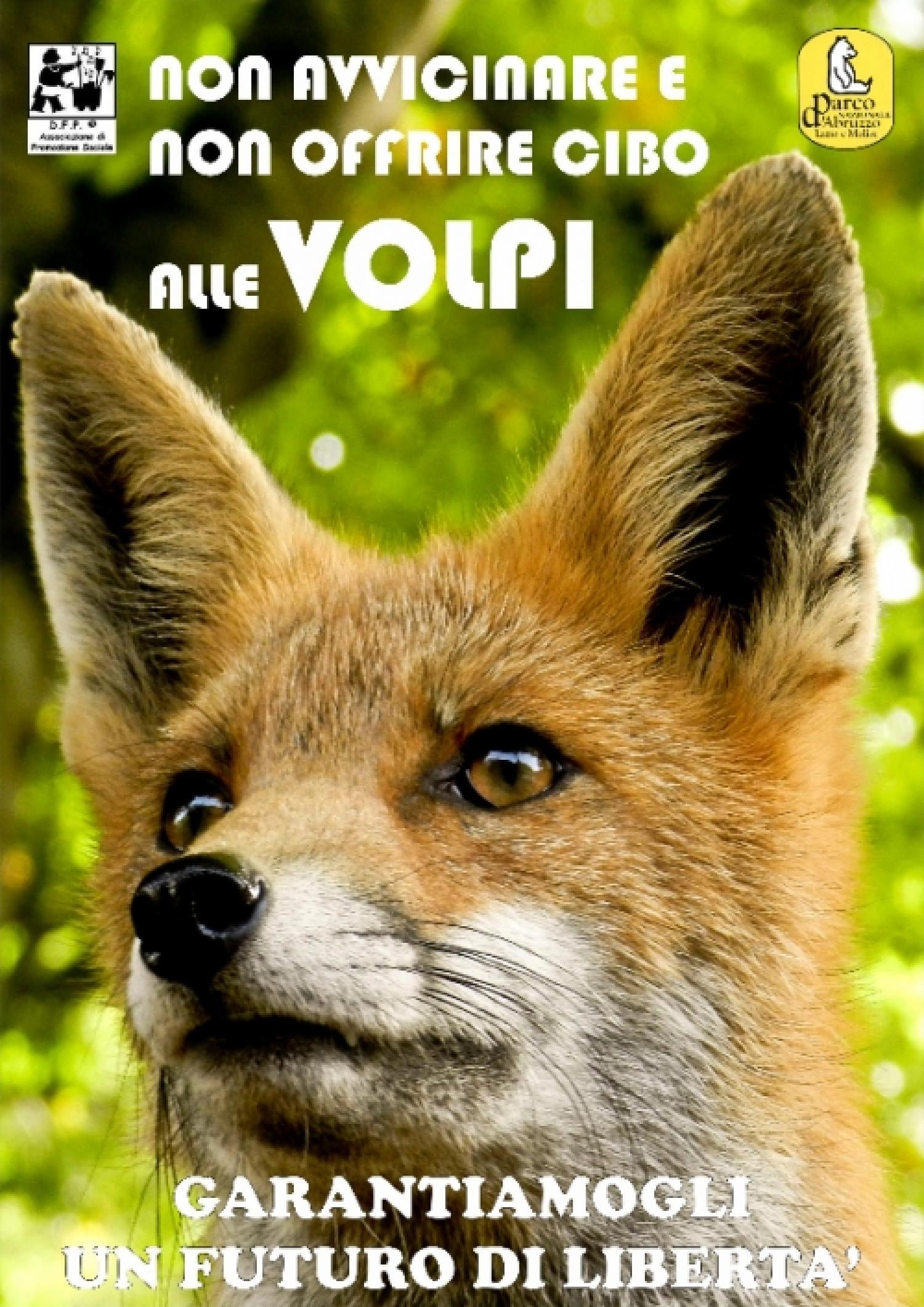 volpe_web.jpg