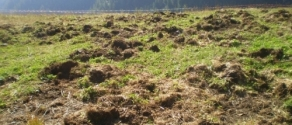 danni agricoltura.jpg
