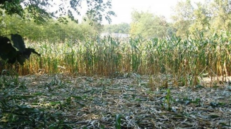 danni fauna agricoltura.jpg