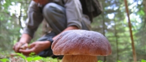 raccolta funghi.jpg