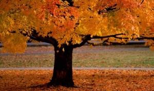 autunno-casadiriposo.jpg