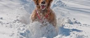 cane-nella-neve-che-corre-felice.jpg
