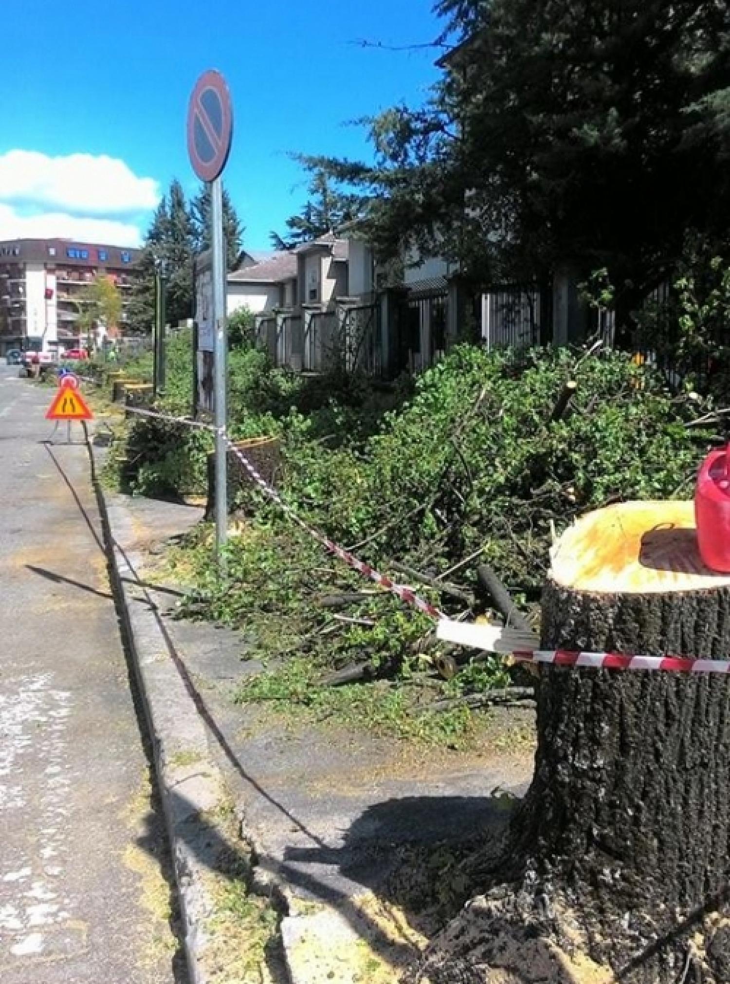 alberi_tagliati.jpg