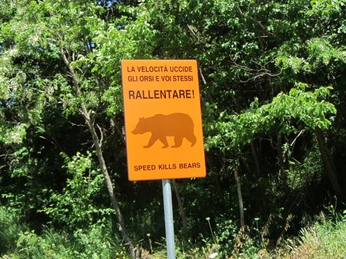 Avezzano informa parco terra di nessuno salviamo l orso for Cabina di montagna grande orso