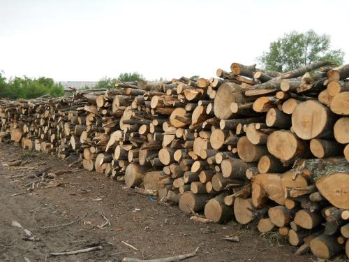 Commercio legna da ardere